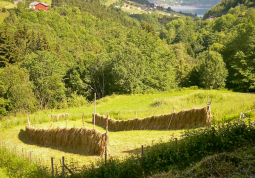 Traditional hay drying